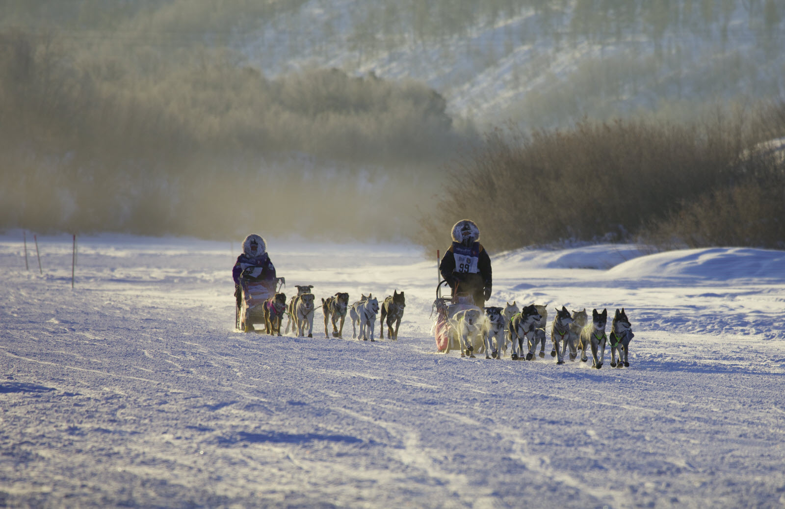 Dogsled, Dogs, Snow